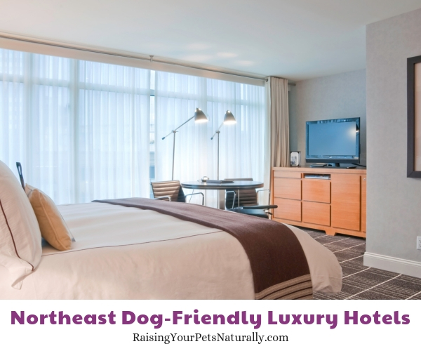 Top hotels in Boston that allow pets
