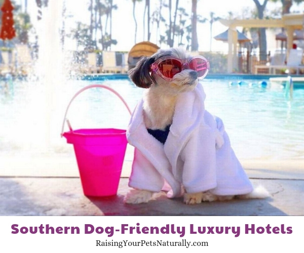 Pet-friendly Hilton Head hotels