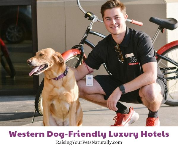 5 star pet-friendly resorts in Idaho