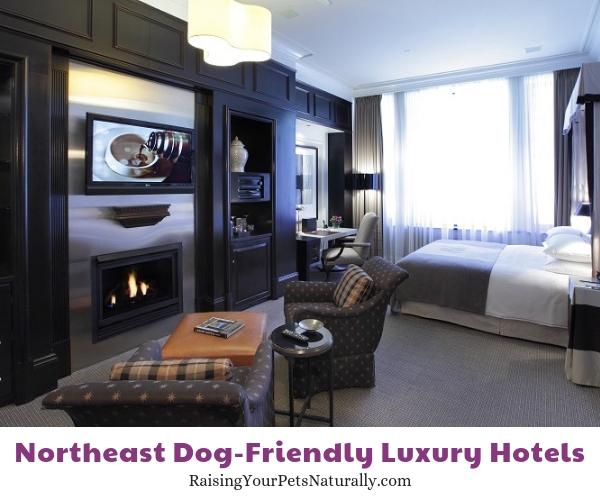 Five star pet friendly Massachusetts hotels
