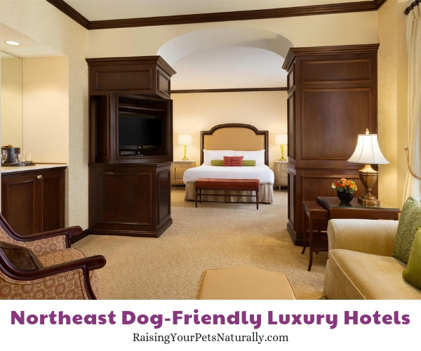 Luxury dog friendly hotels in Delaware