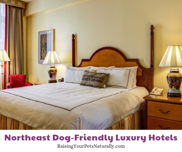 Pet friendly New England hotels