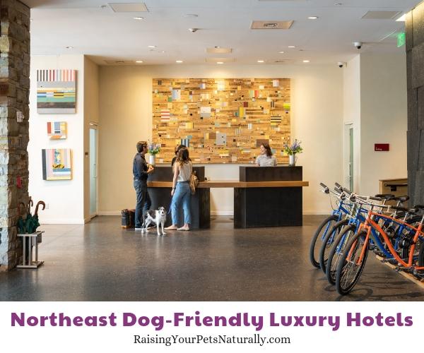 Vermont luxury dog friendly hotels