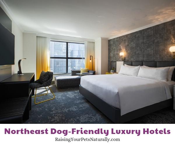 Five star NY NY dog friendly hotels