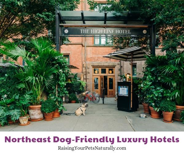 Top NY NY dog friendly hotels