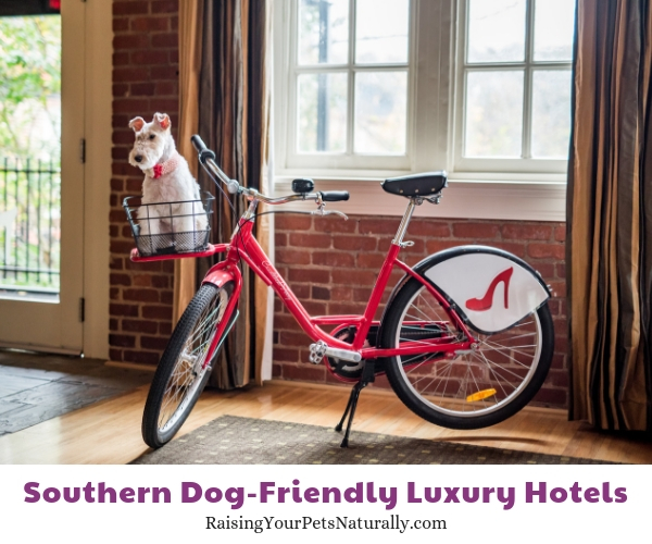 Luxury pet friendly resorts in VA