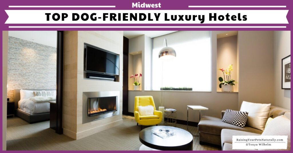 Five star dog-friendly hotels