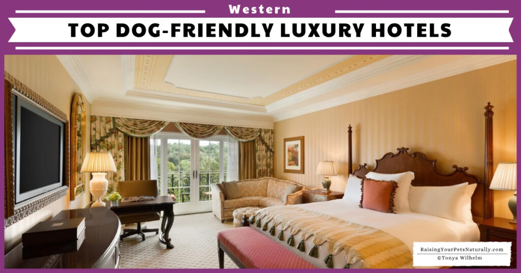 Dog-friendly hotels in the western us
