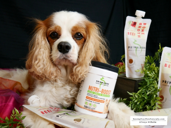 Are probiotics beneficial to dogs