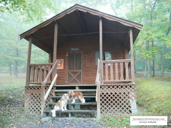 Pet-friendly cabins on the lake