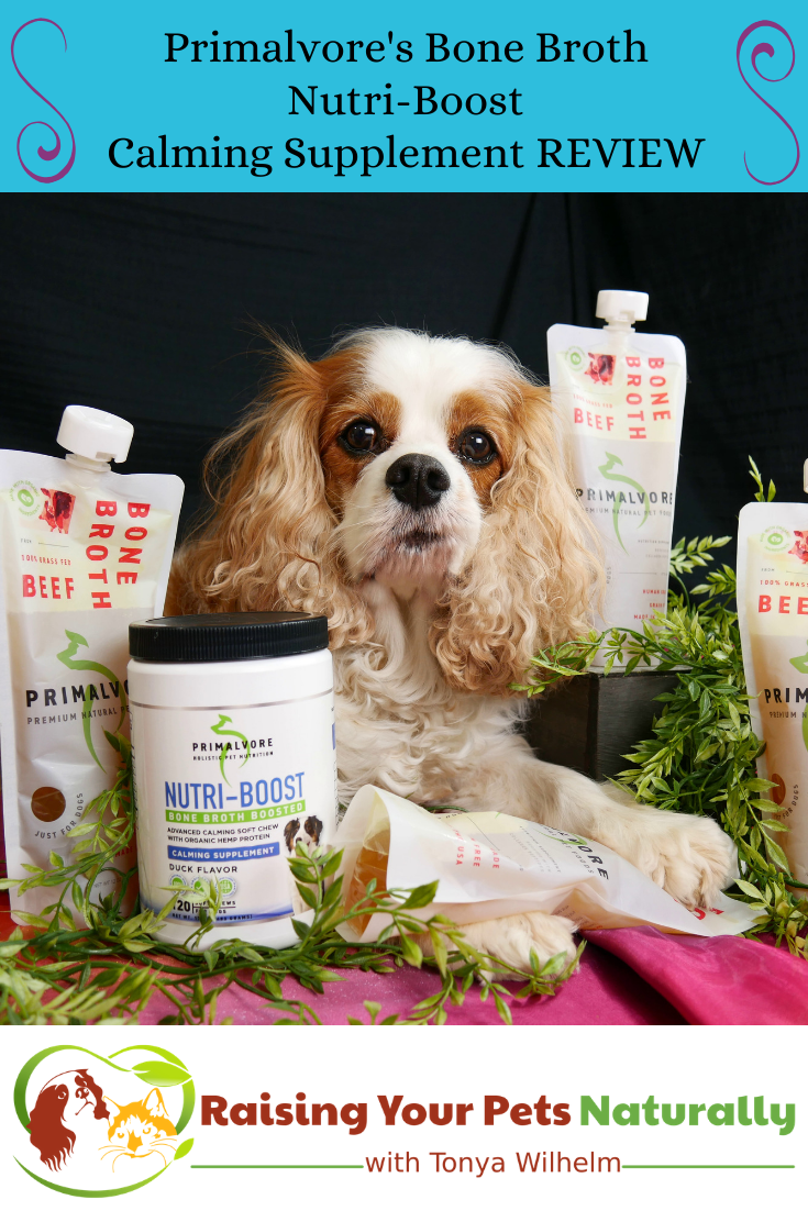 How to Help a Dog with Anxiety Naturally | Natural Dog Anxiety Medications and Supplements