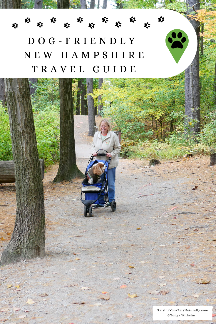 Dog-Friendly Travel Guide for New Hampshire   Raymond Area and Manchester New Hampshire Things to Do with a Dog