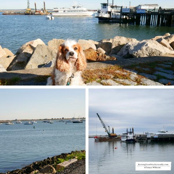 Plymouth, Harbor