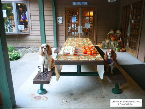 Pet-friendly all inclusive resorts