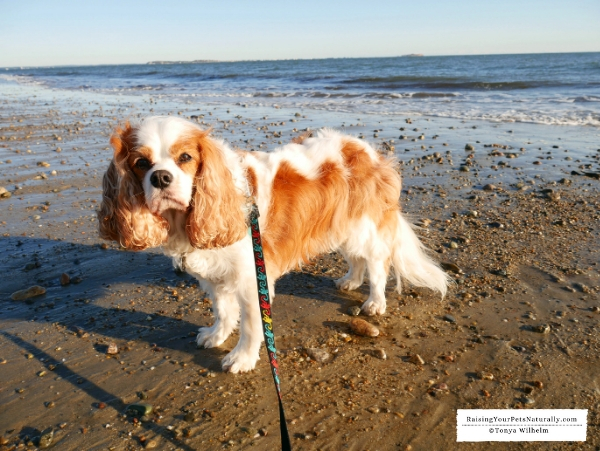 Beaches in Plymouth that allow dogs