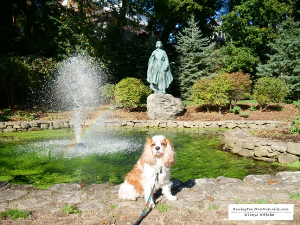 Best dog friendly towns in New England