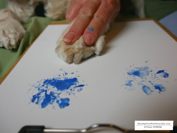 How to do a paw painting
