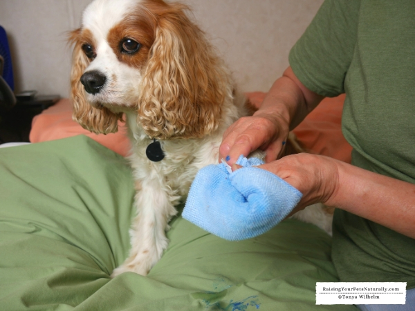 Painting your dog's feet
