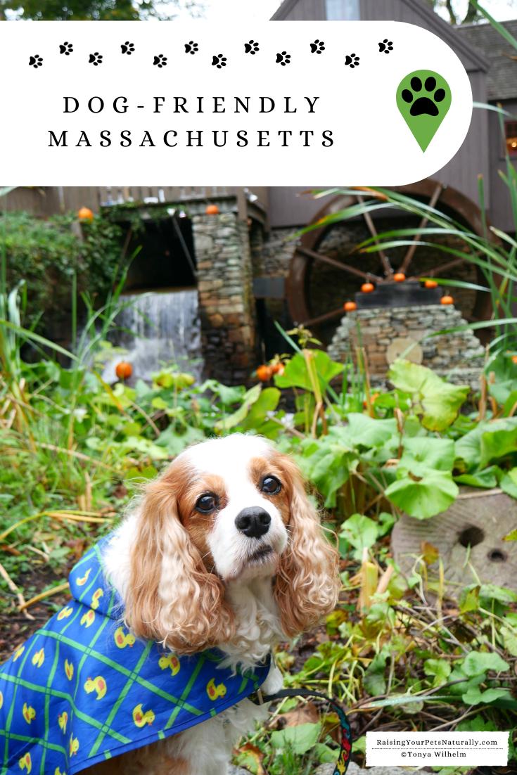 Dog-Friendly Massachusetts Travel Guide