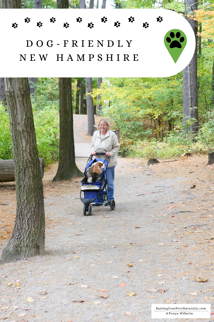Dog-Friendly New Hampshire Travel Guide