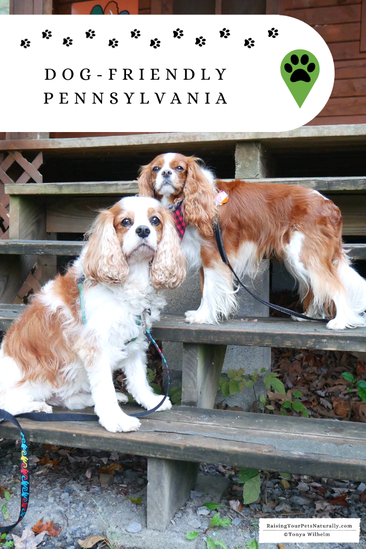 Dog-Friendly Pennsylvania Travel Guide and Accomodations