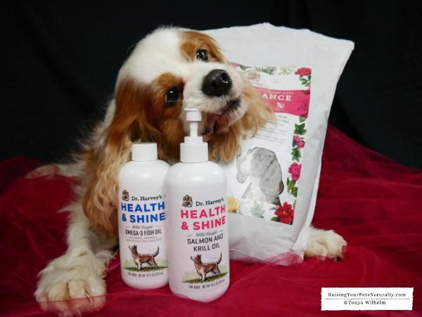 Best raw dog food brands