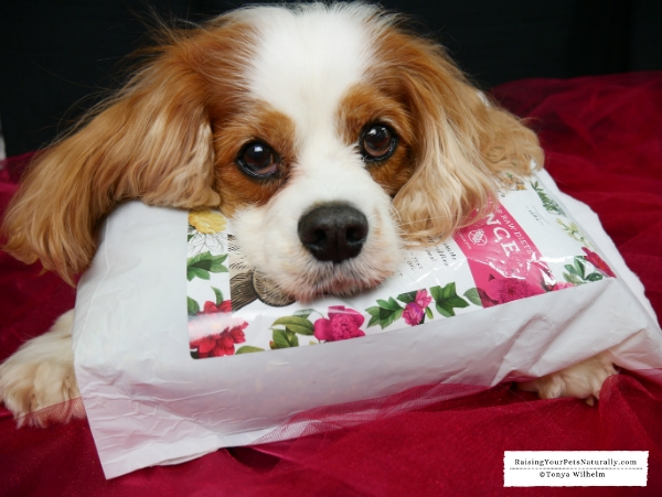 Best fresh foods for dogs