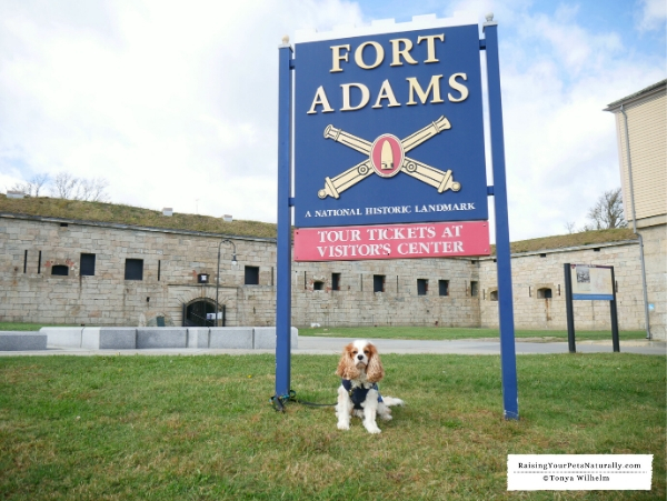 Dog-friendly attractions in RI