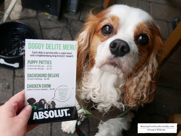 Restaurants that allow dogs