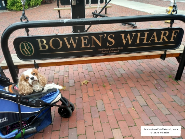 Stores that allow dogs in Rhode Island
