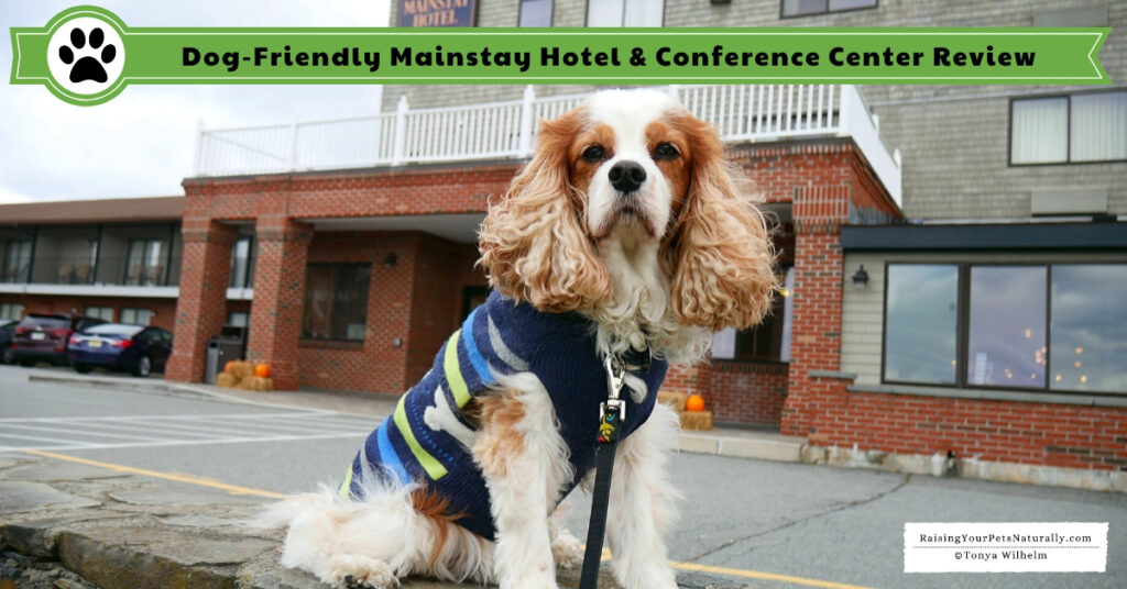 Dog-friendly New England hotels