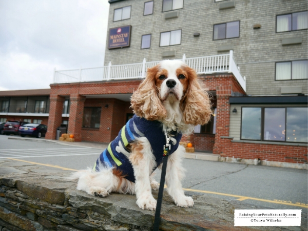 Pet friendly hotels in Newport