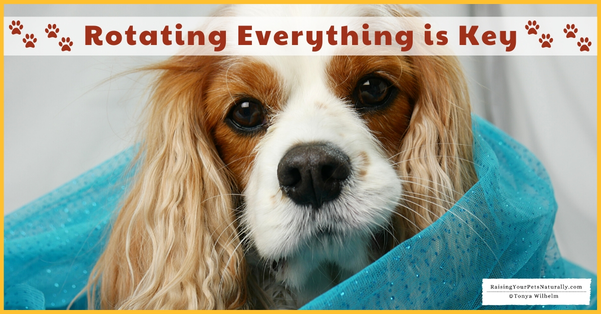 Tips on raising a healthy dog
