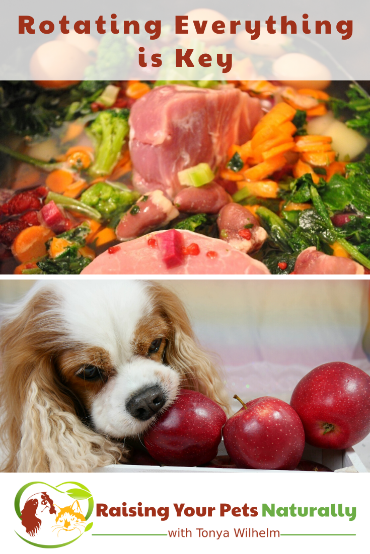 Rotating is Key   My Personal Theory on Rotating a Pet\'s Food, Supplements, and Everything!