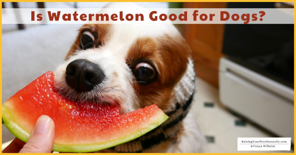 Dogs and watermelon treats