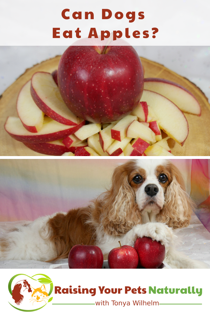 Can Dogs Eat Apples?   Health Benefits of Apples for Pets