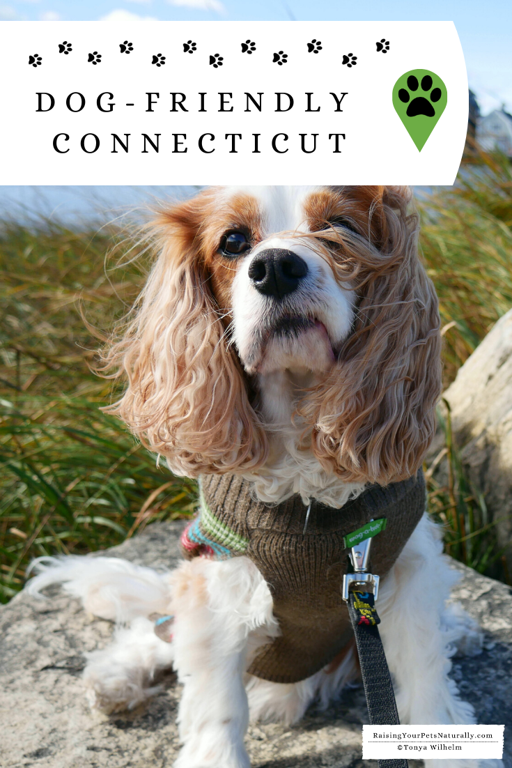 Dog-Friendly Connecticut Travel Guide
