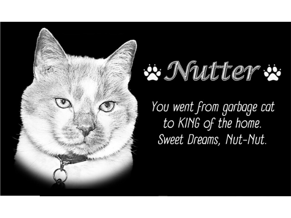 Best grave markers for pets