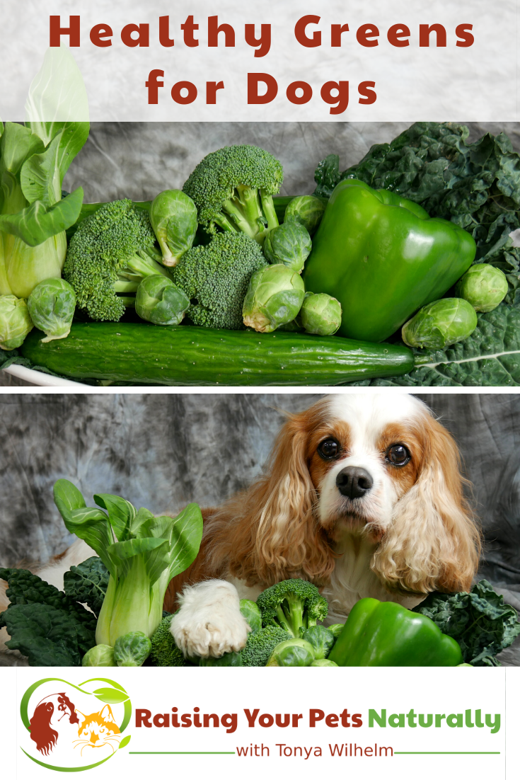 Healthy Greens for Dogs to Add to Raw or Home Prepared Diets | Dexter\'s Super Greens Mix