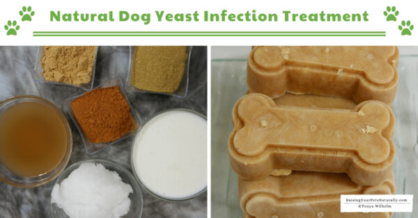 Why do dogs get yeast