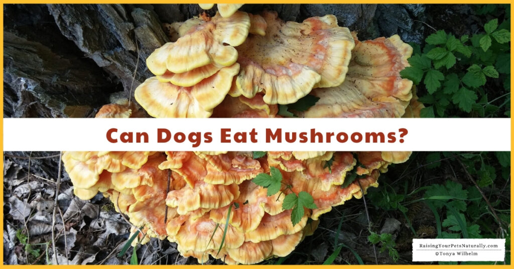 Can dogs have mushrooms