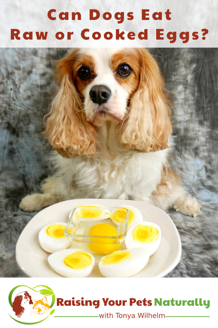 Can Dogs Eat Raw or Cooked Eggs?   Are Eggshells Good for Dogs? (Early access for our Patreon community)