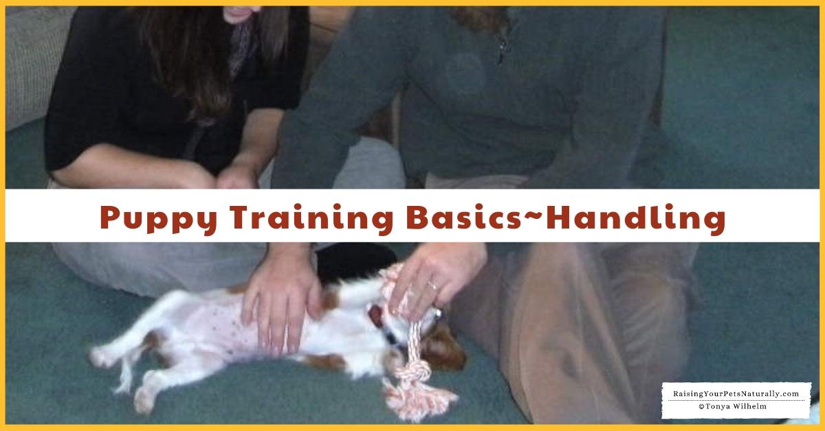 Puppy training 101 the basics