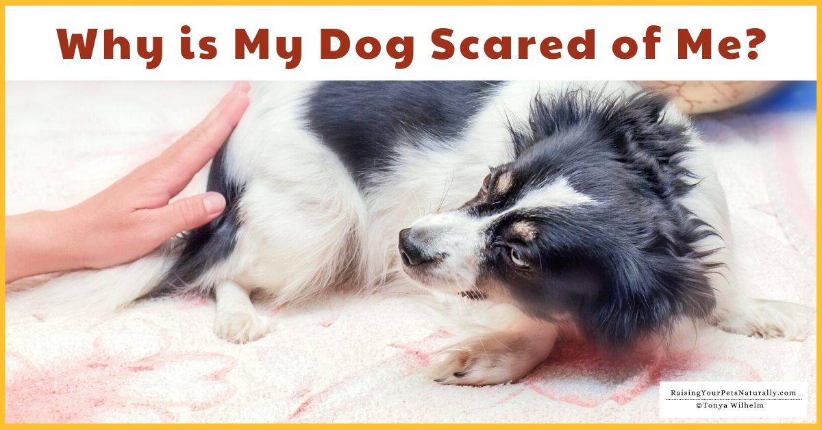 Dog scared of everything