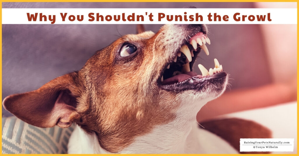 Don't punish a dog for growling