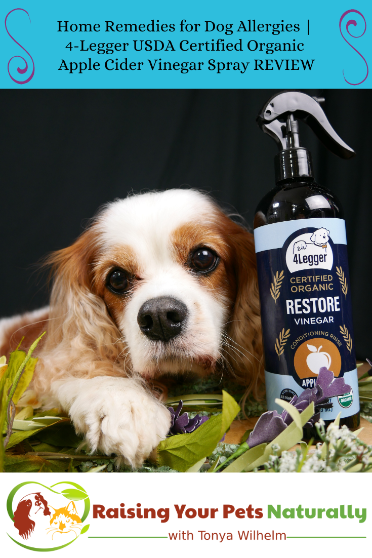 Home Remedies for Dog Allergies   4-Legger USDA Certified Organic Apple Cider Vinegar Spray (Early access for our Patreon community)