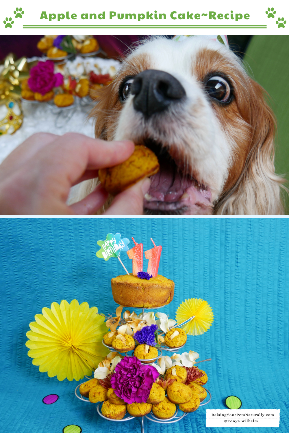 Healthy Dog Birthday Cake Recipe with Apples and Pumpkin   How to Make a Dog Cake (Early access for our Patreon community)