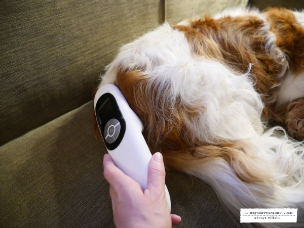 Treatment for Chiari Malformation in Cavaliers