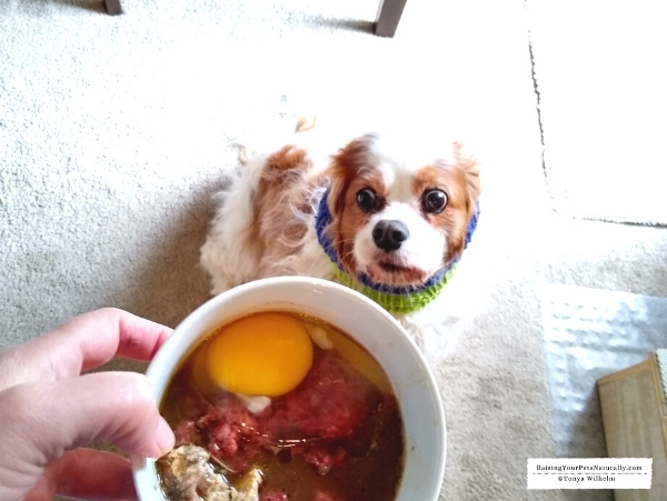 Best food for dog stress
