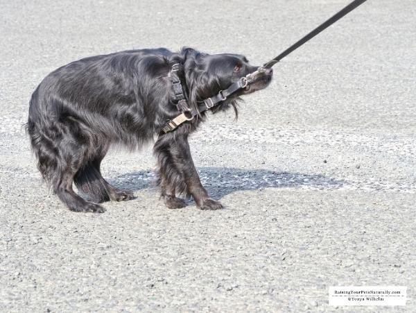 Scared dog photos